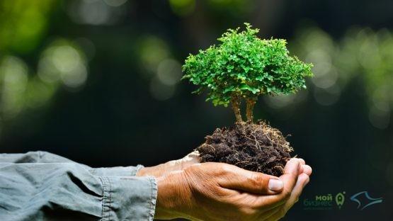 В Крыму стартовала экологическая акция «Сохраняя природу, сохраняешь жизнь!»