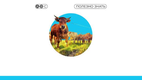 Объявлен отбор на получение субсидий в поддержку животноводства